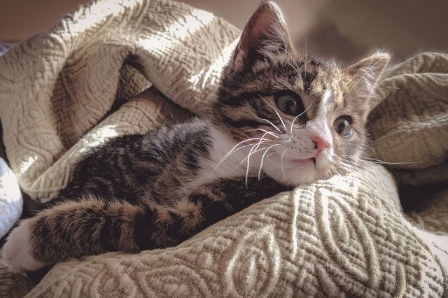 living with kitten:  part three